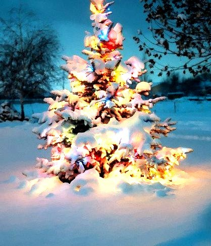 Tree Lights, West Jordan, Utah