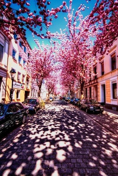 Cherry Blossom Shadows, Kyoto, Japan