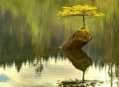 Lake Tree, British Columbia, Canada