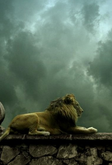 Lion King, Valhalla