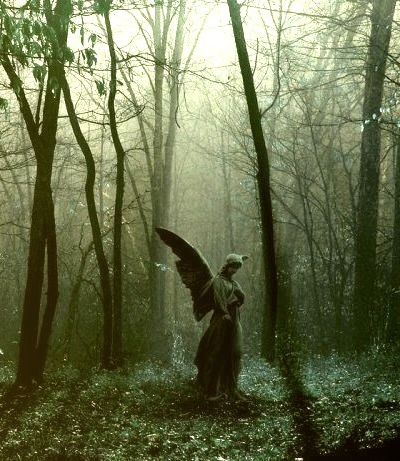 Forest Angel, The Ozarks, Missouri