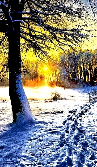 Winter Sunset, Belgium