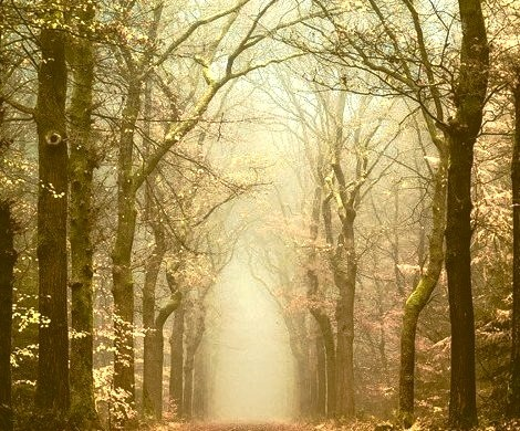 Into the Mystic, The Netherlands