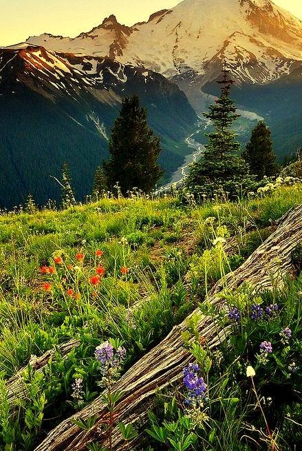 Sunset, Mt. Rainier, Washington
