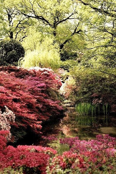 Isabella Plantation in Richmond Park, south-west London, England