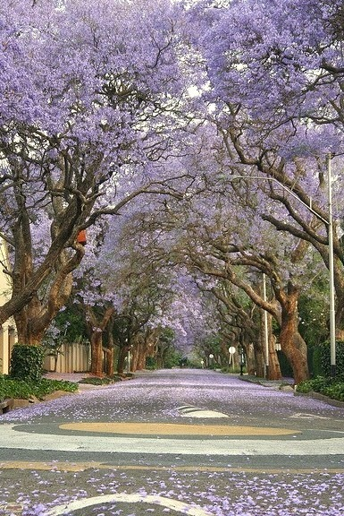 Spring in Johannesburg, South Africa