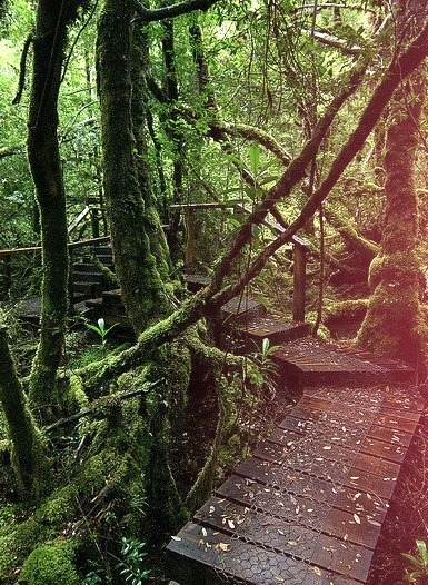 Creepy crawly track in the Great Wilderness of Tasmania, Australia