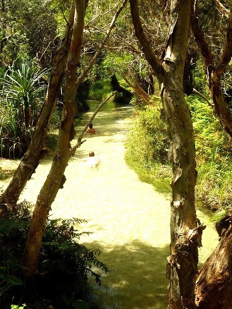 The clear freshwater stream of Eli Creek on Fraser Island, Australia